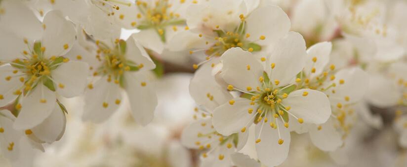 Le parfum de Douceur Florale